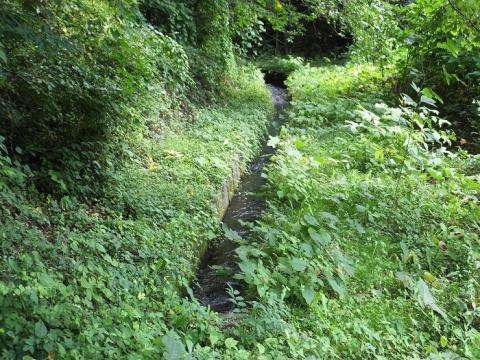 鷽ノ口円形分水から始まる佐口用水路