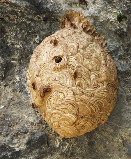 鷽の口塚の本の石像物・スズメバチの巣