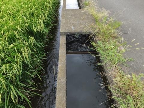 小山谷戸堰用水路・田んぼへ堰上げ給水