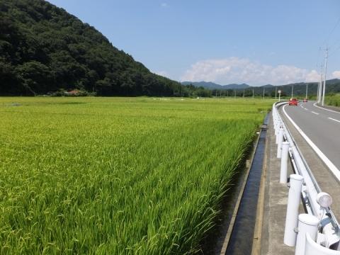 愛川町尾山水利組合の田んぼ