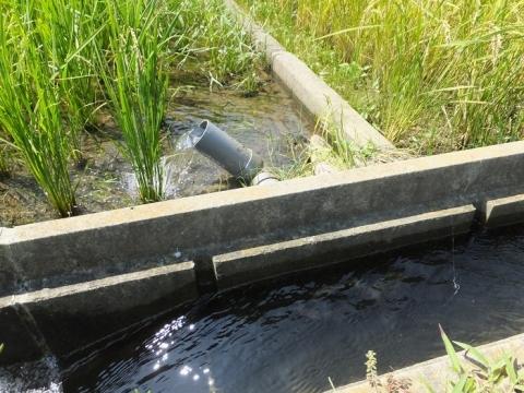 用水取入れ風景・愛川町尾山水利組合の田んぼ
