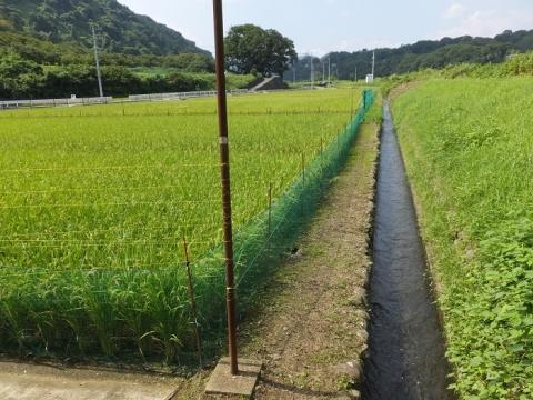 愛川町・丸山耕地水利組合の田んぼ