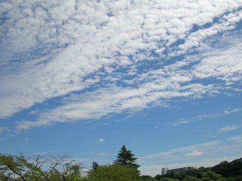 広瀬川9-3