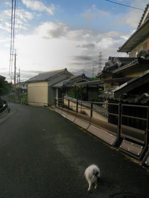 DSCN2911.jpg
