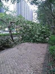 DSC_0070 (4)台風後