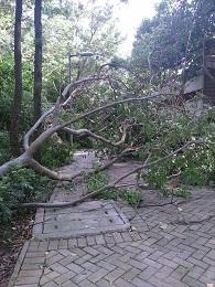 DSC_0078 (4)台風後2017年8月25日