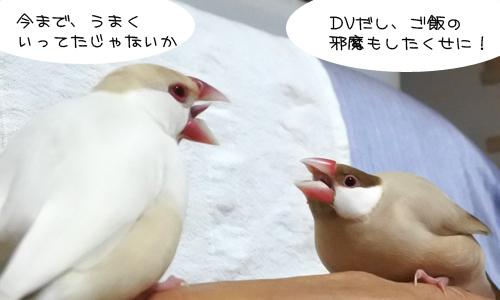 文鳥昼メロ劇場_3