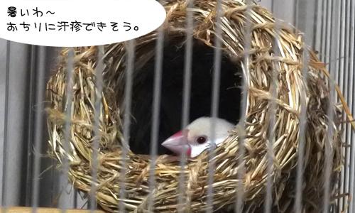 抱卵で色々困ったよ_1