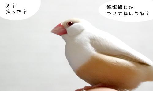 ぴのしゃんのショット集_3