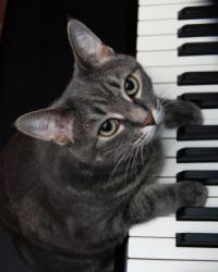 pianocat