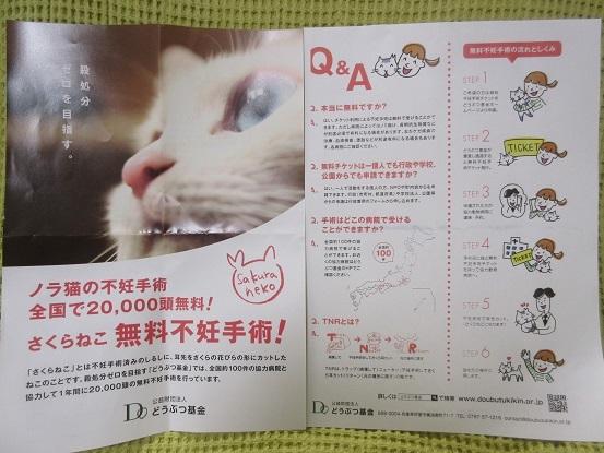 11 動物基金ポスター