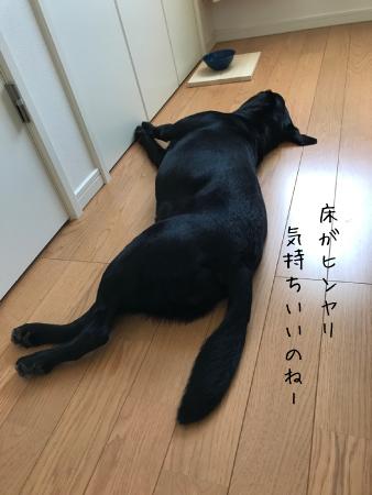 床でごろりん