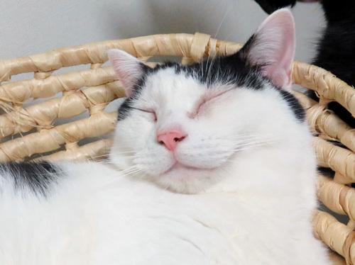 寝てるちっぷの顔