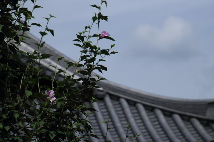 170820-eiho-303.jpg