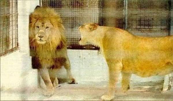 Power夫婦喧嘩