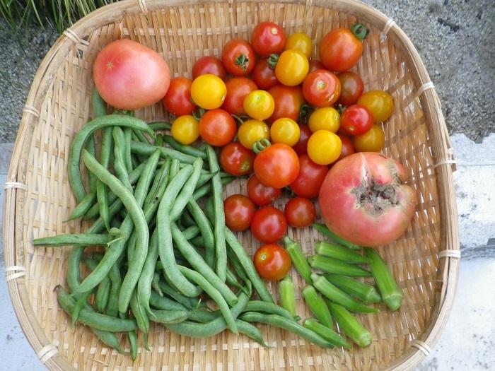 収穫1_17_07_10