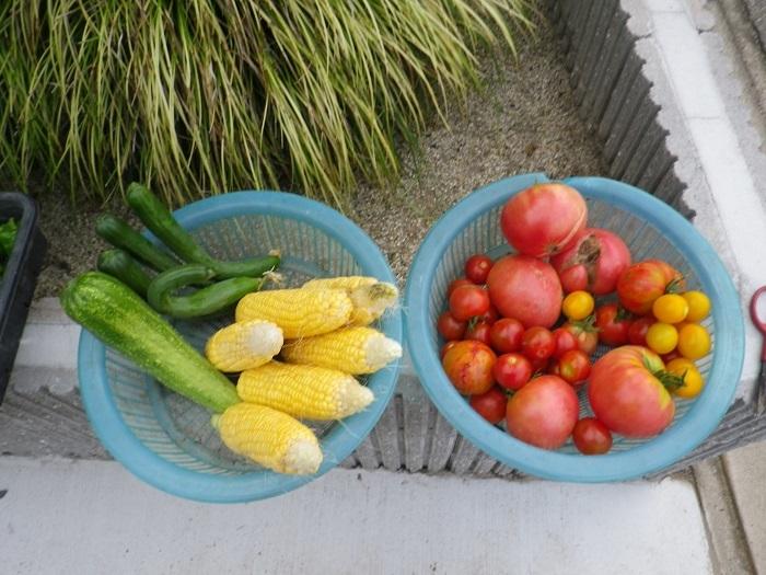 収穫2_17_07_11