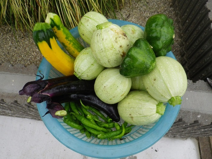 収穫1_17_07_12