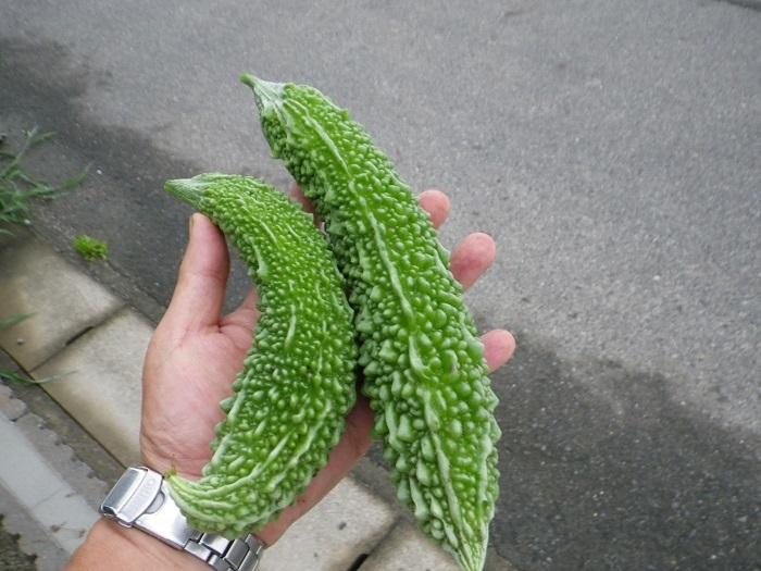 収穫3_17_07_13