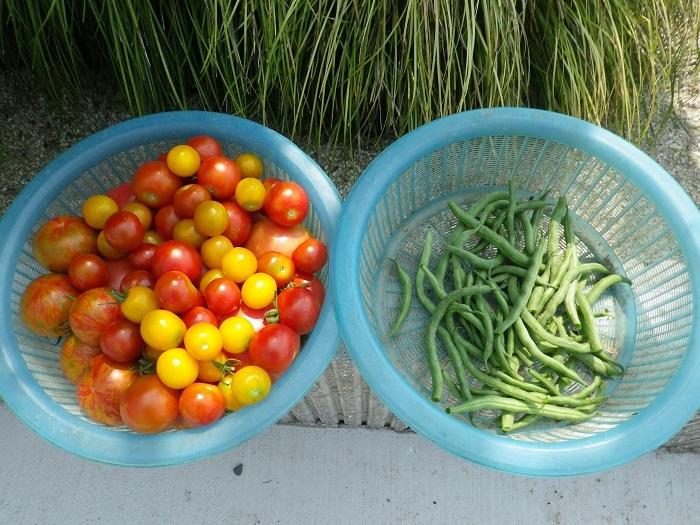 収穫2_17_07_16