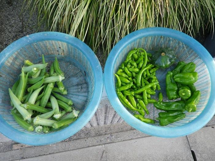 収穫3_17_07_18