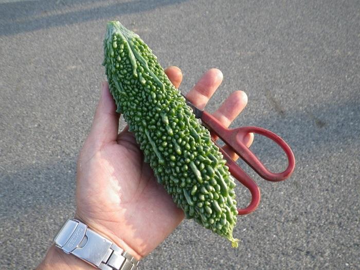 収穫4_17_07_18