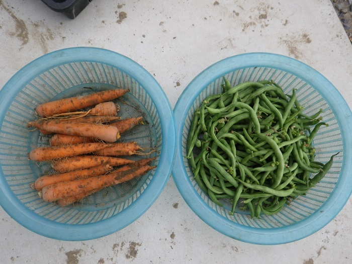 収穫4_17_07_23