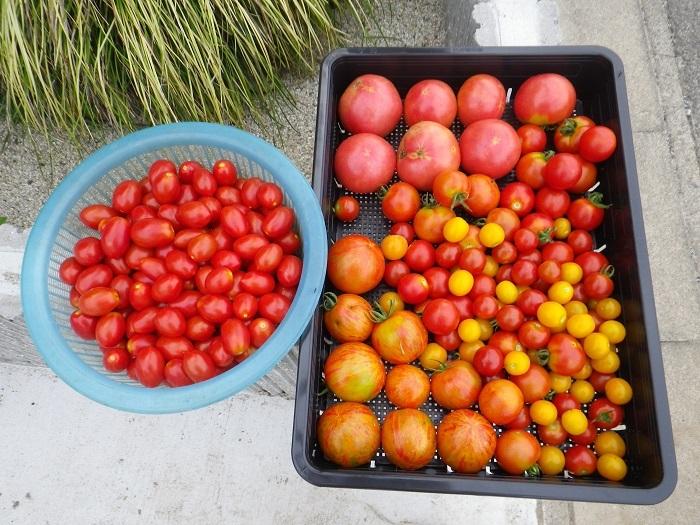収穫5_17_07_23