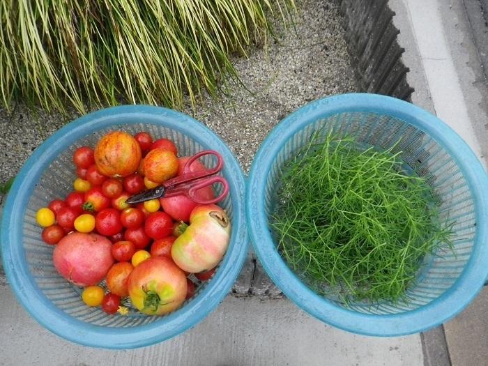 収穫2_17_07_25