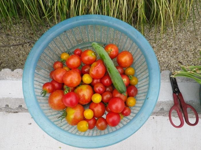 収穫2_17_07_26