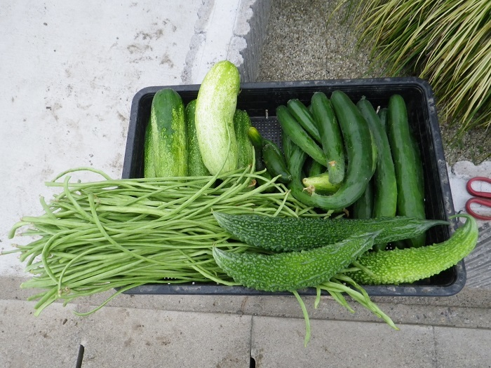 収穫2_17_07_30