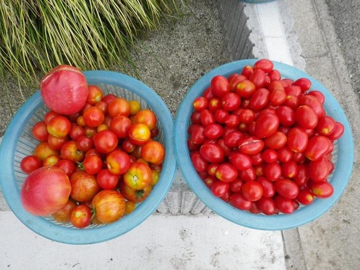 収穫3_17_07_30