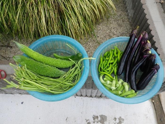 収穫17_07_31