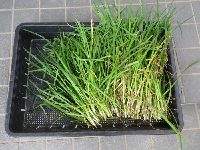 収穫3_17_08_05