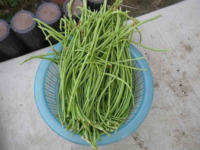 収穫2_17_08_06