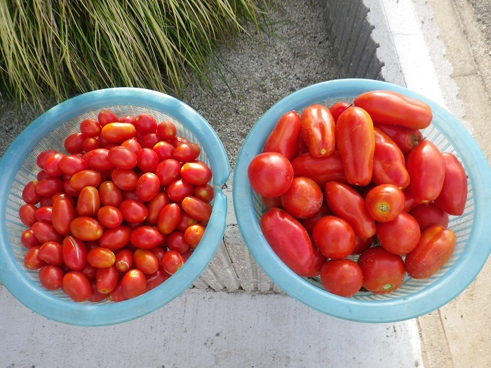 収穫4_17_08_06