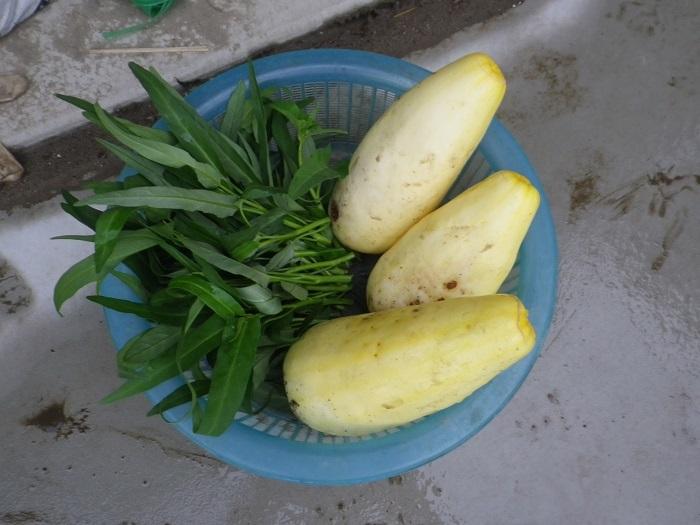 収穫17_08_08