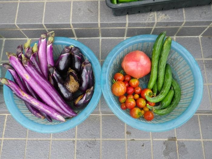 収穫1_17_08_12