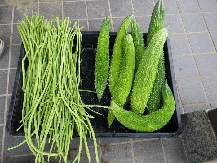 収穫3_17_08_12
