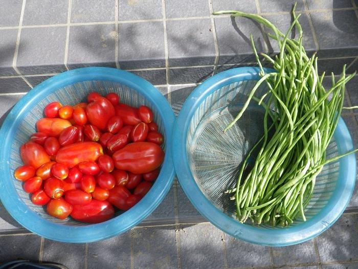 収穫3_17_08_13