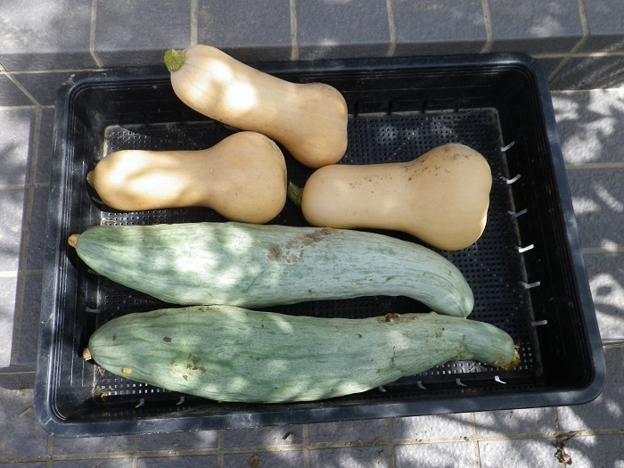 収穫4_17_08_13