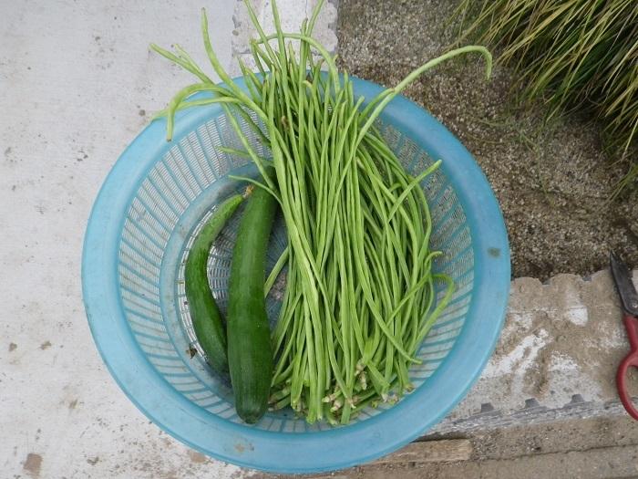 収穫1_17_08_14