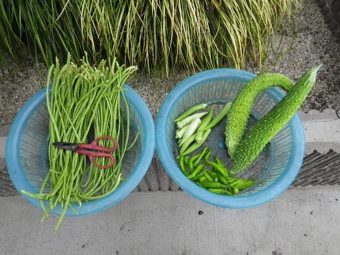 収穫1_17_08_15