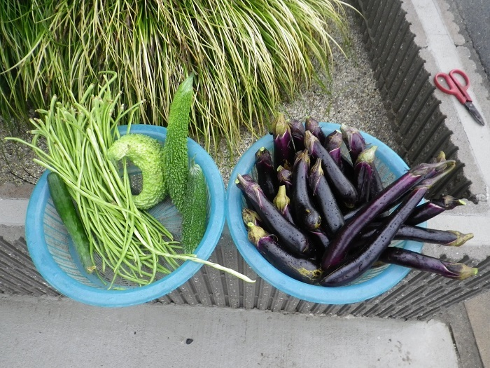 収穫17_08_18