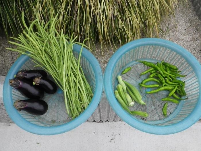 収穫1_17_08_22
