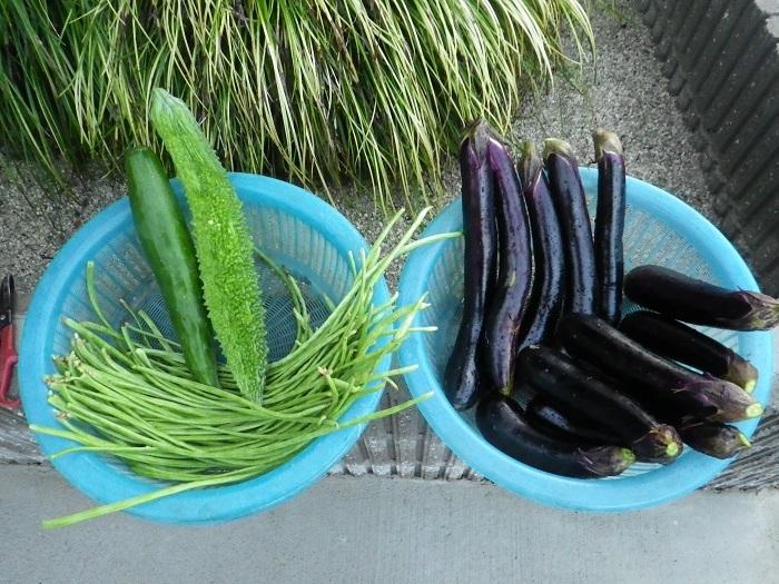収穫17_08_23