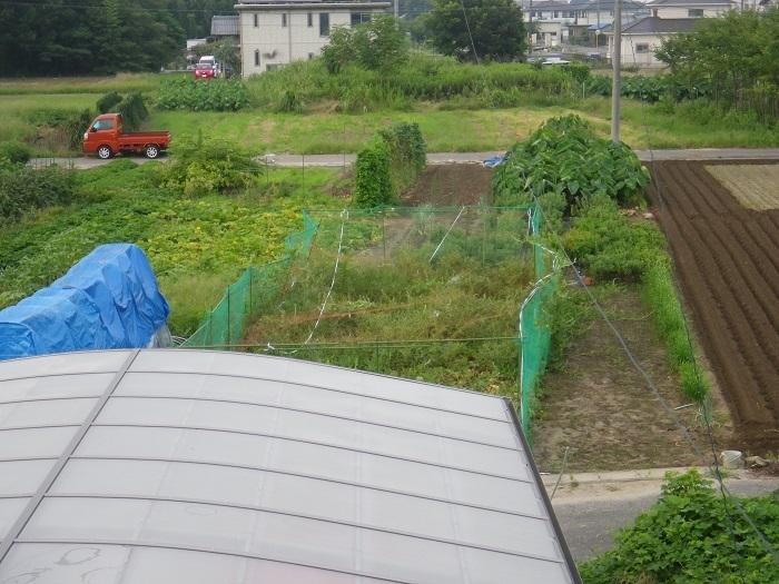 畑の様子1_17_08_21