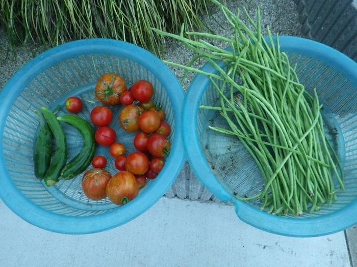 収穫1_17_08_28