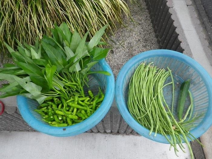 収穫17_08_29