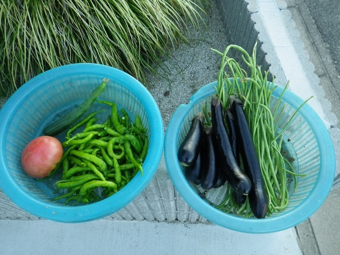収穫17_09_01